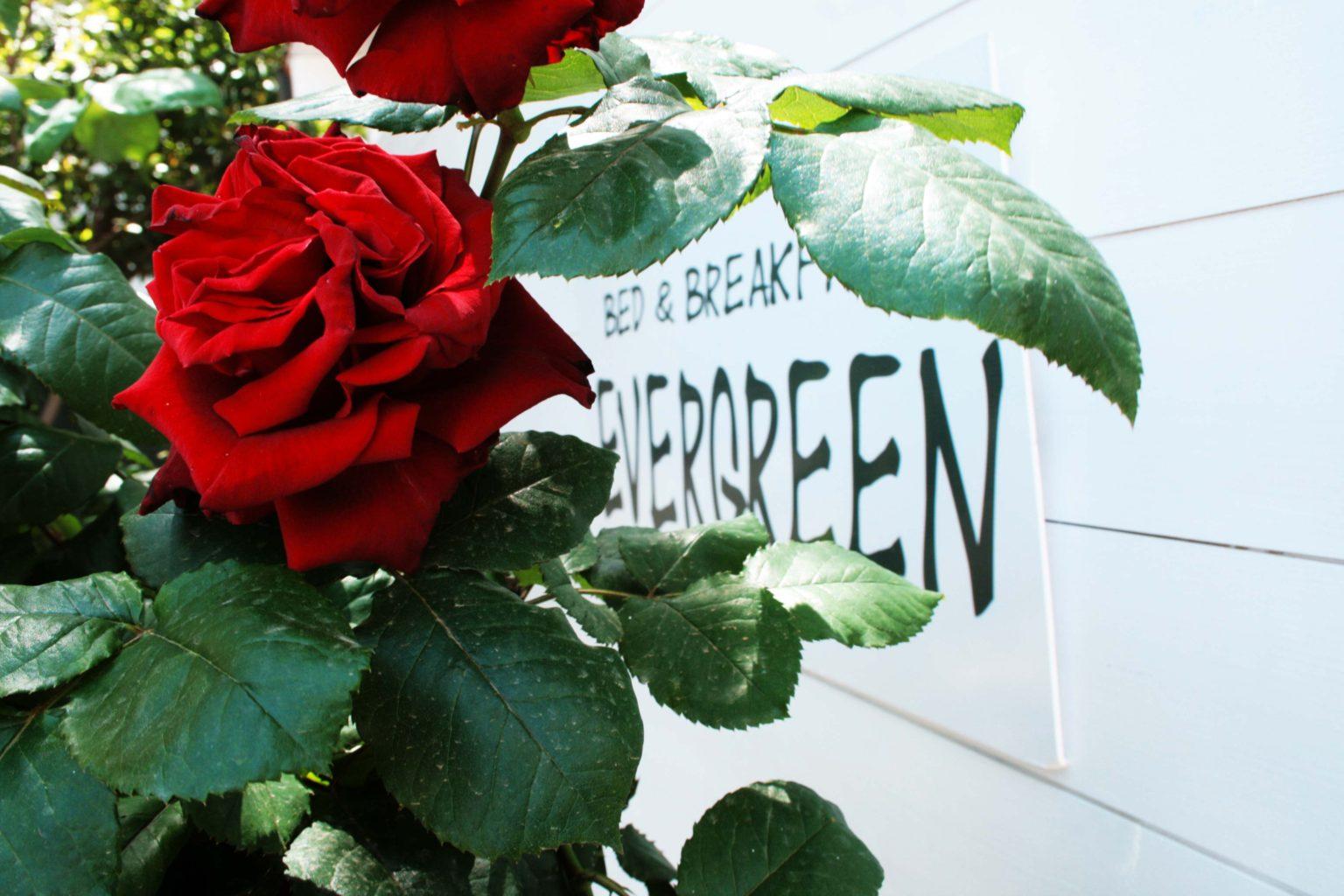 evergreen_giardino